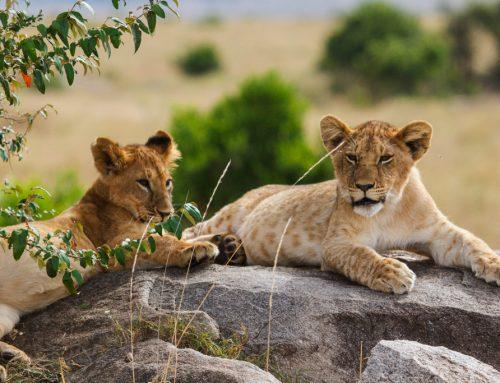 KENIJA 9. del: Maasai Mara