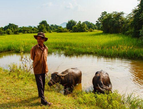 Kambodža – 9. del: Battambang